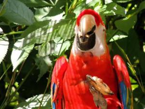 jardin des oiseaux