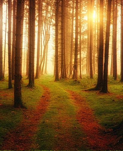 Forêt de Saou - Des Branches et Vous