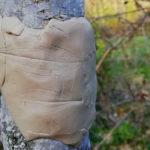 Art thérapie - Des Branches et Vous - Christel Gobillard