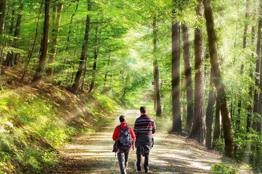 Méditation active - Des Branches et vous