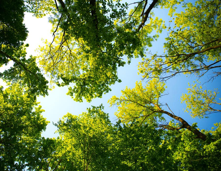 Sylvothérapie - Des Branches et Vous